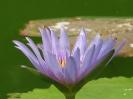 Çiçekler_8